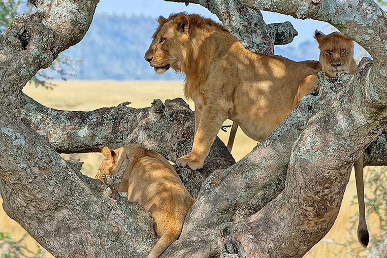 Fotosafari_Tansania_Fotoreise_Afrika_19