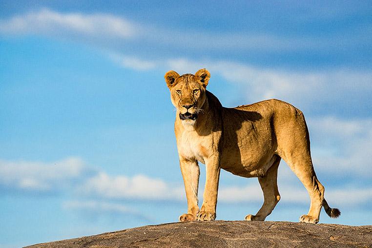 Fotosafari_Tansania_Fotoreise_Afrika_20