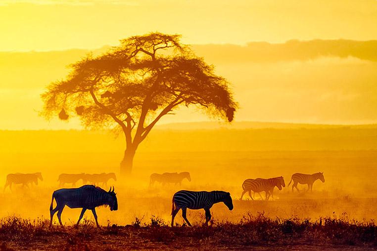 Fotosafari nach Tansania mit Benny Rebel