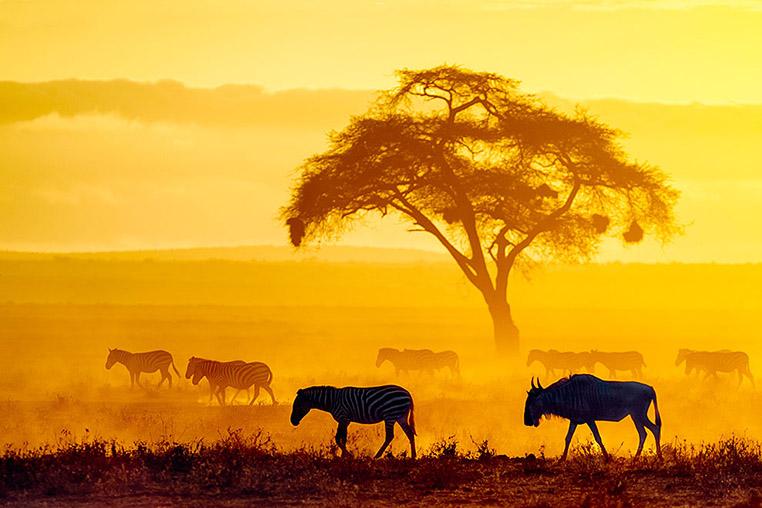 Fotosafari_Tansania_Fotoreise_Kenia_Afrika_03
