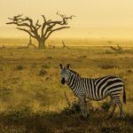 Luxus Urlaub in Afrika mit Fotografieworkshop unter Anleitung von Benny Rebel