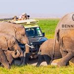 Tips und Anleitung vom bekannten Naturfotografen: Benny Rebel