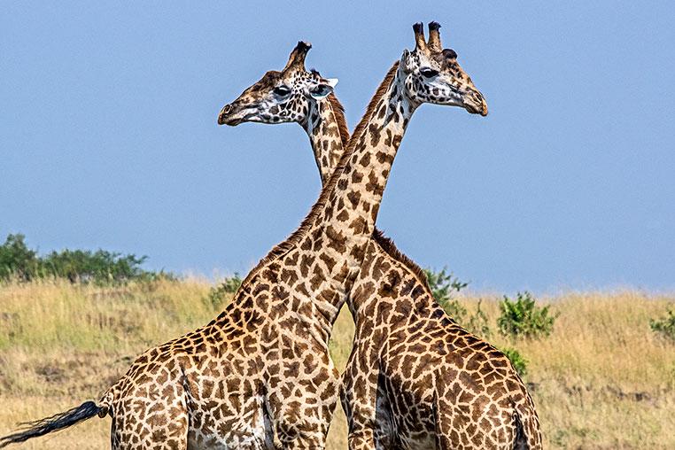 Fotosafari-Afrika-Fotoreise_16