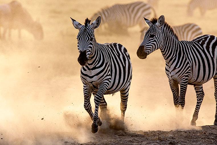 Fotosafari-Afrika-Fotoreise_22