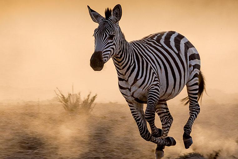 Fotosafari-Afrika-Fotoreise_23