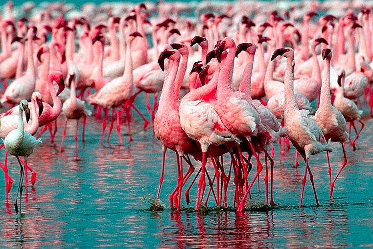 fotoreise-kenia-fotosafari-afrika-041