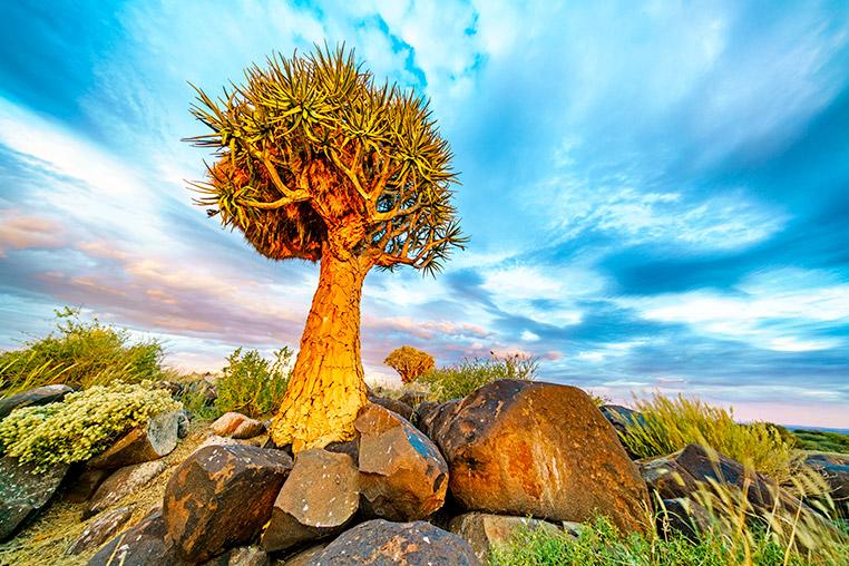 Fotosafari Namibia Koecherbaum