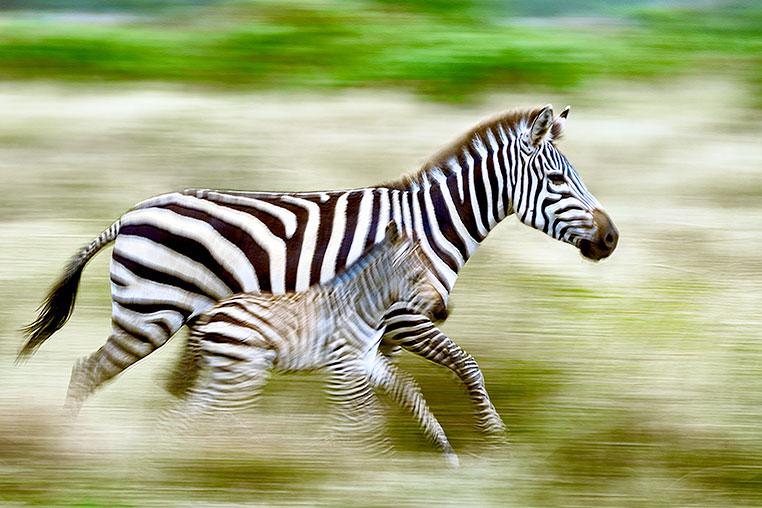 Fotosafari durch Tansania