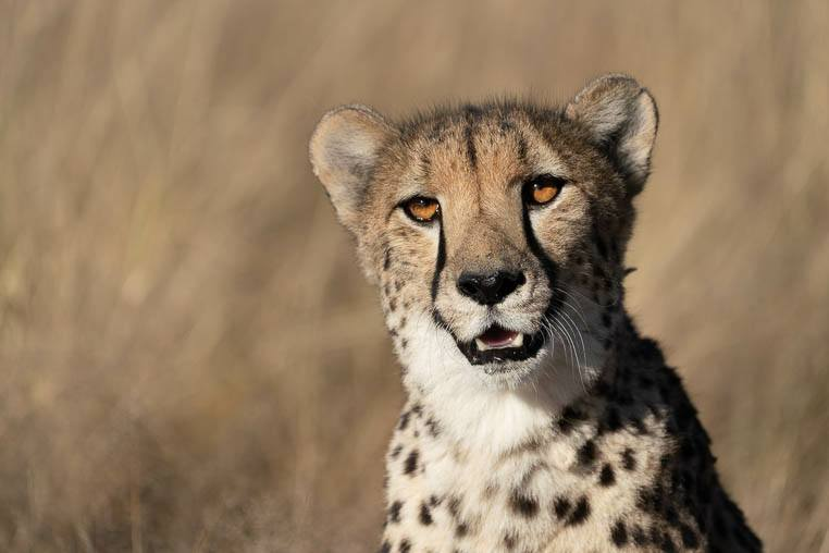 Tiere_Namibia_fotografieren_1