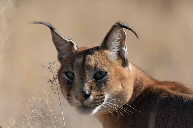 Tiere_Namibia_fotografieren_3