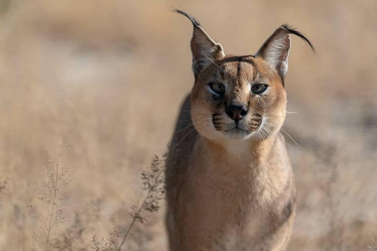 Tiere_Namibia_fotografieren_4