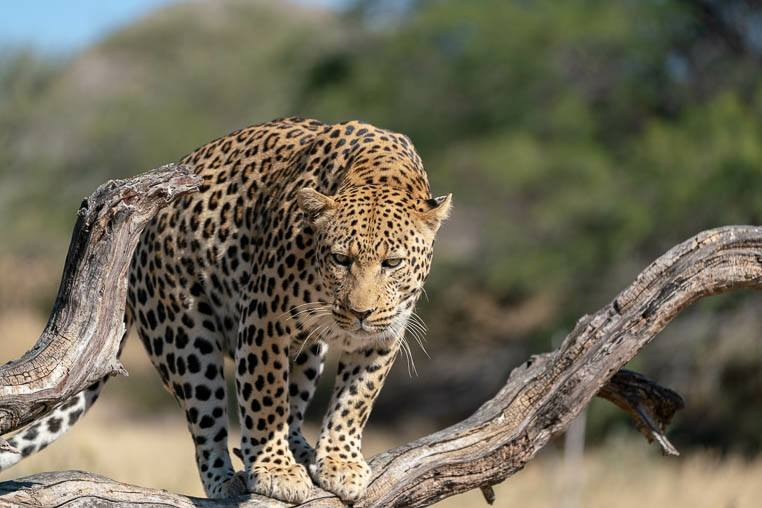 Fotoreise_Namibia_Fotosafari_Afrika_2018__0127