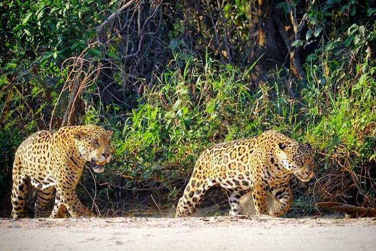 Fotosafari-Pantanal-Fotoreise-Brasilien_131