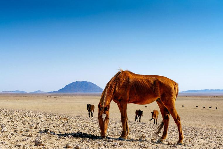 Fotoreise_Namibia_Fotosafari_Afrika_Wildpferde