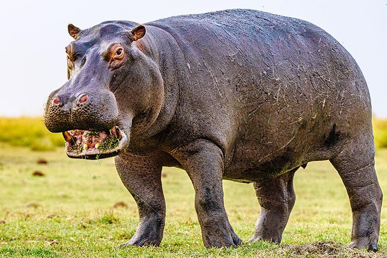 Fotosafari_Simbabwe_Fotoreise_Chobe-Nationalpark_00