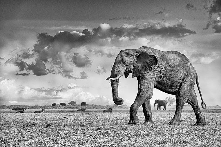 Fotosafari_Simbabwe_Fotoreise_Chobe-Nationalpark_07
