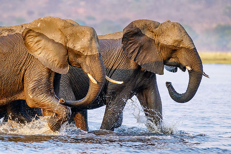 Fotosafari_Simbabwe_Fotoreise_Chobe-Nationalpark_08