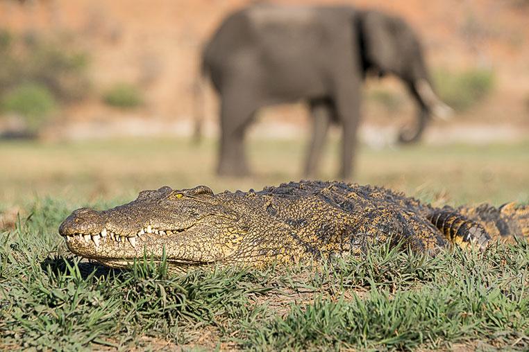 Fotosafari_Simbabwe_Fotoreise_Chobe-Nationalpark_25