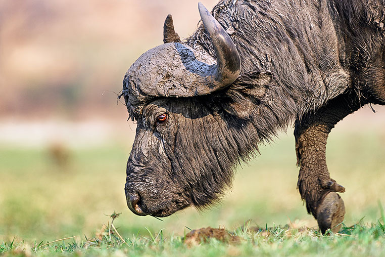 Fotosafari_Simbabwe_Fotoreise_Chobe-Nationalpark_29