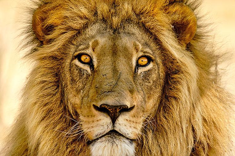 Fotosafari_Simbabwe_Fotoreise_Chobe-Nationalpark_30