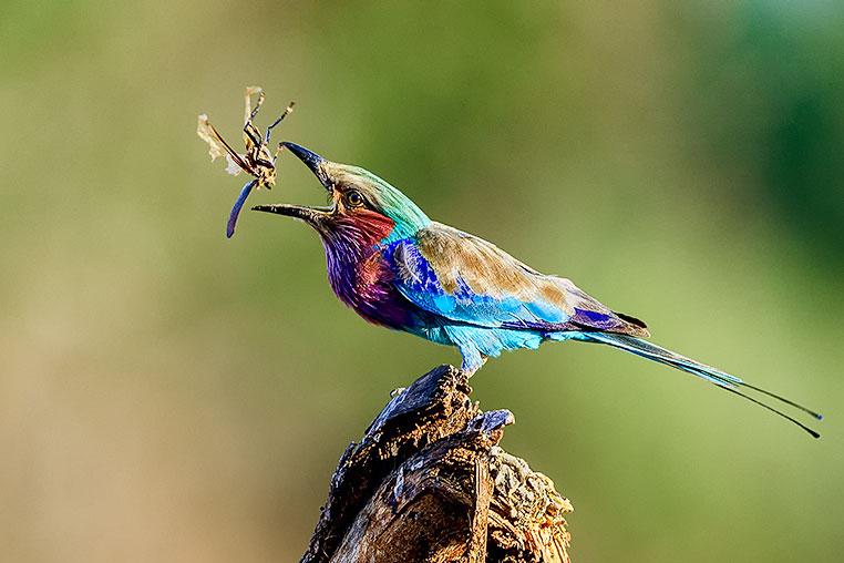 Fotosafari_Simbabwe_Fotoreise_Chobe-Nationalpark_32