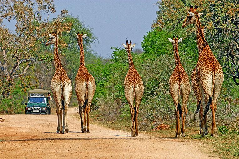Fotosafari_Simbabwe_Fotoreise_Chobe-Nationalpark_33