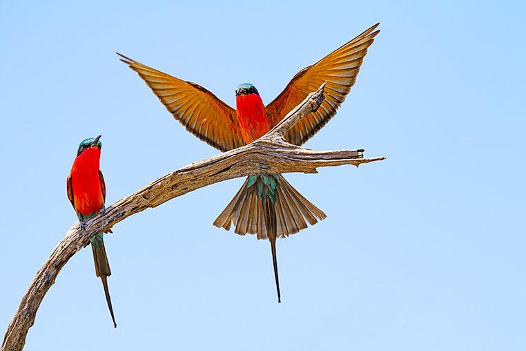 Fotosafari_Simbabwe_Fotoreise_Chobe-Nationalpark_35