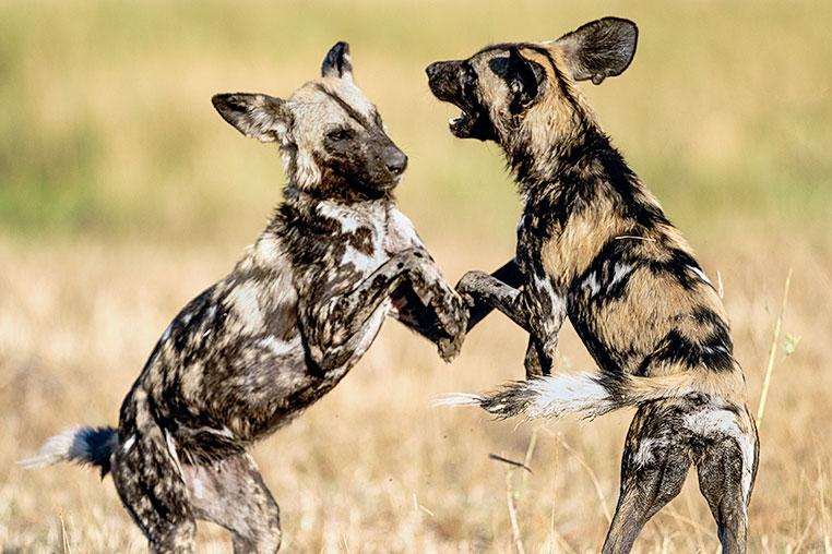 Fotosafari_Simbabwe_Fotoreise_Chobe-Nationalpark_36