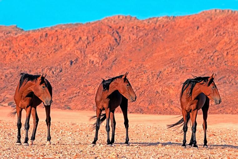 Fotoreise_Namibia_Fotosafari_Afrika_Wildpferde_synchron