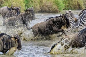 Fotoreise Kenias Norden + Masai Mara