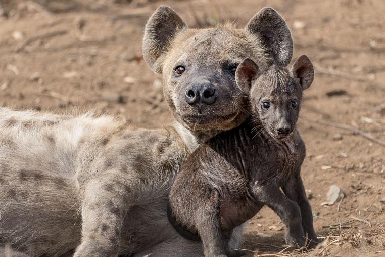 fotosafari mit benny rebel durch suedafrika