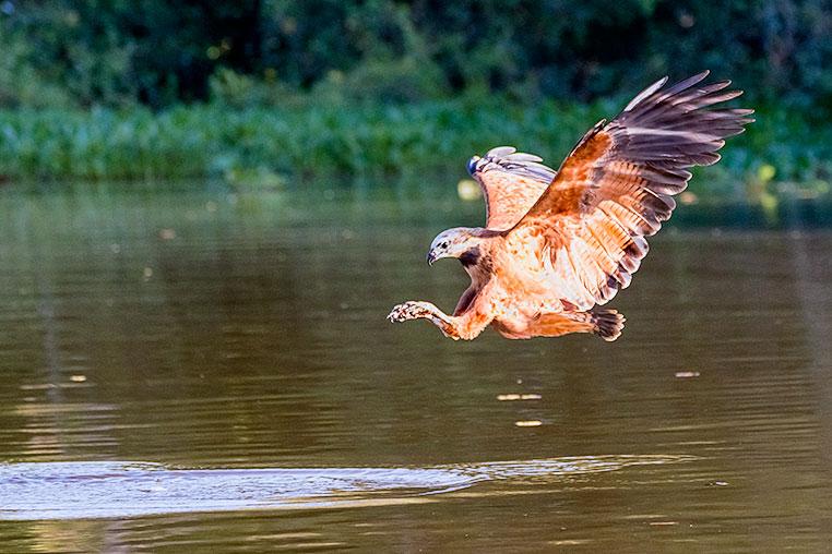 Bilder von Brasiliens Pantanal. Aufgenommen von Benny Rebel auf der Fotosafari 2018 durch das Pantanal. Fotoreisen mit Benny Rebel.  www.Fotosafari-Fotoreise.de