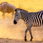Bild des Tages: Fotoreise Kenia, Der Savannenstaub