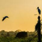 Bild des Tages: Fotoreise Brasilien, Der Mensch
