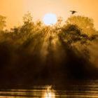Bild des Tages: Fotoreise Brasilien, Die Sonne