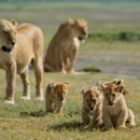 Bild des Tages: Fotoreise Tansania, Schätze