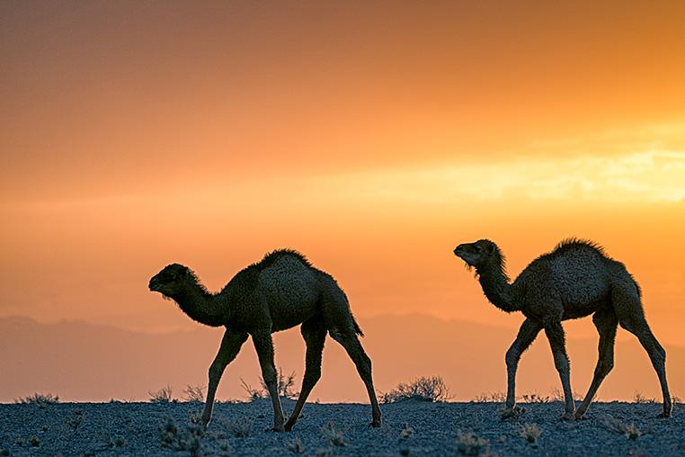 Iran_fotoreise_fotografie_fotosafari_010