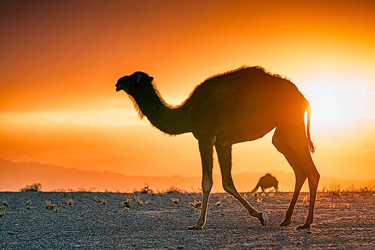 Iran_fotoreise_fotografie_fotosafari_011