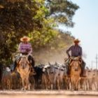 Livebericht: Fotoreise Brasilien, Die Cowboys