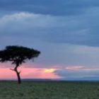 Livebericht: Fotoreise Kenia, Masai Mara