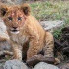Livebericht: Fotoreise Kenia, Impressionen