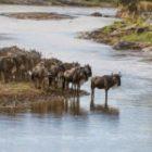 Abenteuer Massai Mara-Fotoreise