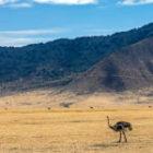 Bild des Tages: Fotoreise Tansania, Der Strauß