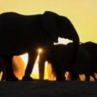 Bild des Tages: Fotoreise Simbabwe, Elefanten