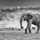 Bild des Tages: Fotoreise Botswana, Elefanten