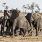 Livebericht: Fotoreise Simbabwe, Impressionen