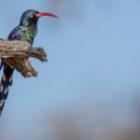 Vogelfotografie auf meiner Fotosafari in Südafrika