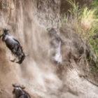 Im August finden meine 2 Fotoreisen durch Kenia statt
