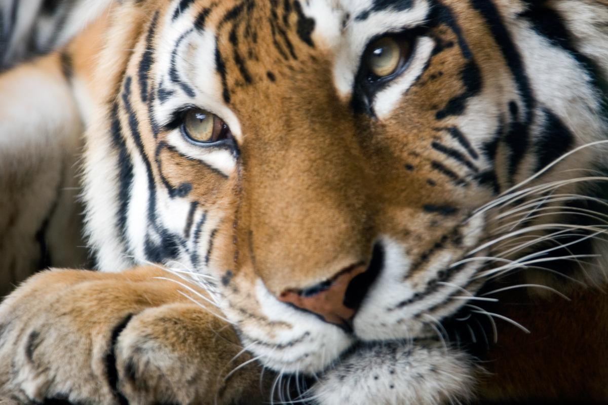 fotoreise_indien_tiger_fotosafari_002