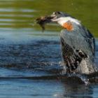 Vogel-Fotografie-Workshops auf unseren Fotoreisen durch Brasilien
